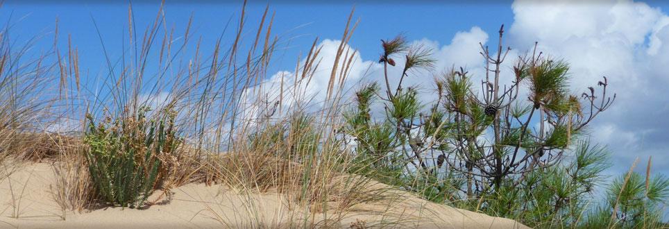 diapo-dune.jpg
